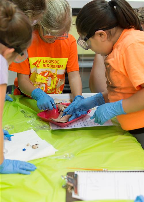 students work together to dissect a squid